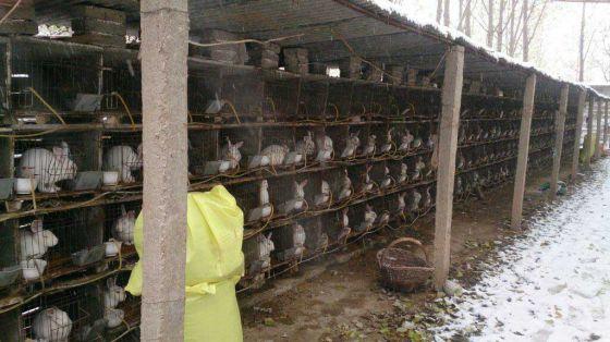 Представители ПЕТА посетили в Китае три зверофермы по разведению кроликов