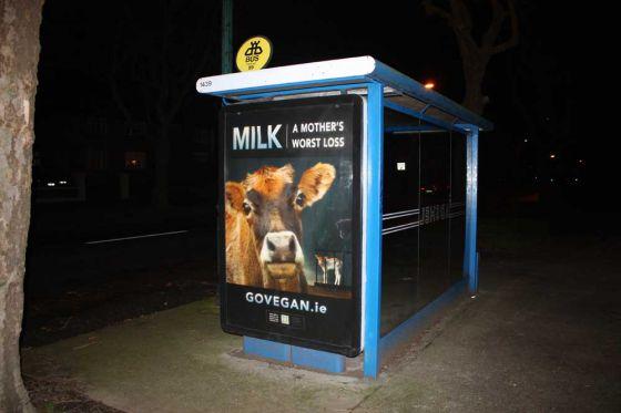 Go vegan: в Ирландии прошла масштабная  кампания в защиту сельскохозяйственных животных