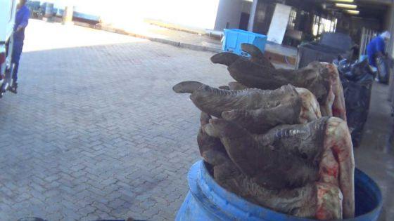 Расследование ПЕТА  на страусиных фермах в Южной Африке — поставщиков  кожи для Hermès и Prada