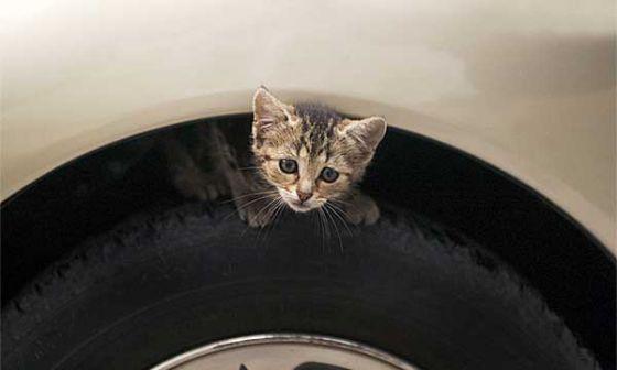 Nissan  призывает  водителей стучать по капоту: рекламная кампания в защиту животных