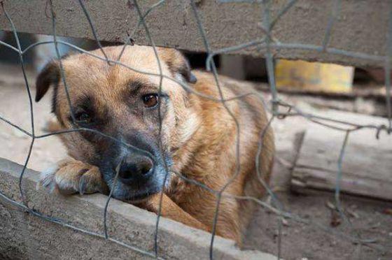 """19-20 марта в Москве  пройдёт 11 выставка приютских животных, которые хотят """"Домой!"""""""