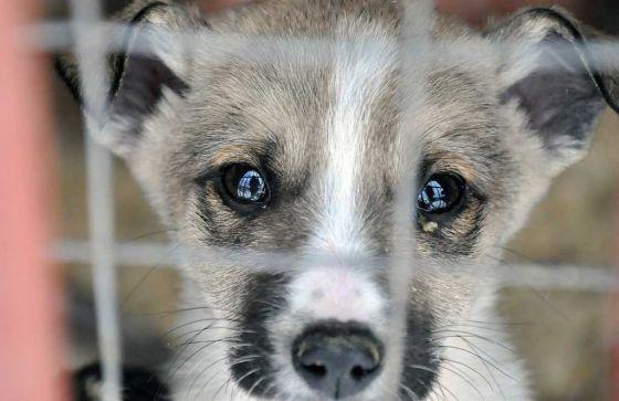 В Польше заплатят по 120 евро желающим взять собак из приютов