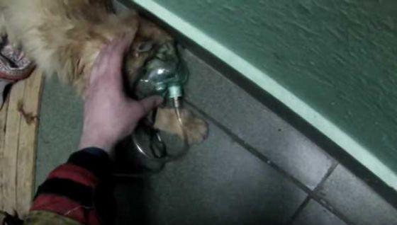 Пожарные спасли кошку в Москве