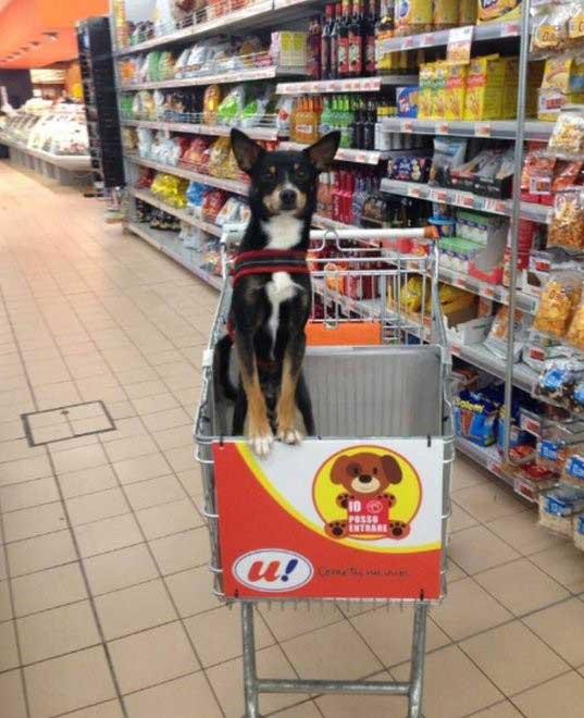 В итальянском супермаркете появились специальные  тележки для собак