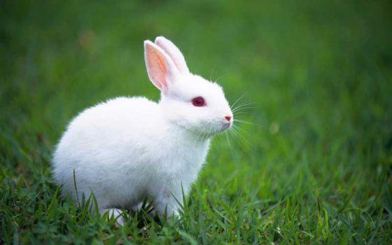 В Индии запретили тестирование  моющих средств на животных