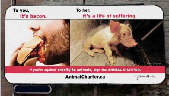 В Канаде стартовала крупнейшая  кампания в защиту животных