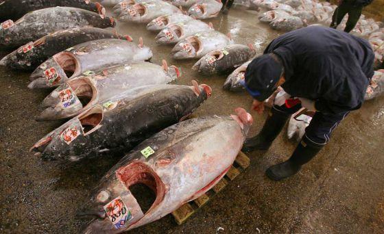 Ученые нашли в рыбе опасные для организма человека вещества