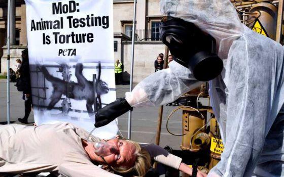 Президент  ПЕТА  Ингрид Ньюкирк подверглась пыткам в Лондоне