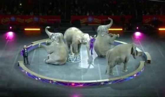 Цирк Ringling Bros. провёл финальные шоу со слонами
