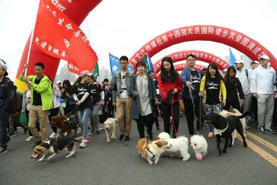 Китайцы выступили против торговли собачьим мясом