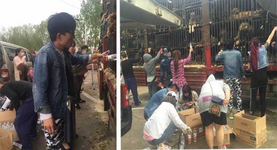 Китайские активисты спасли 350 собак