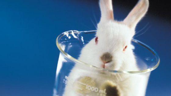 Австралия запретит  тестирование косметики на животных