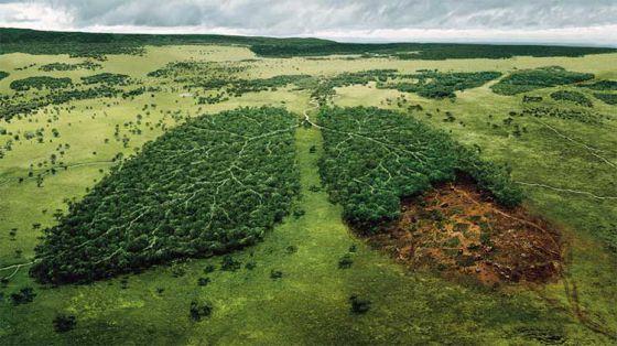 В Норвегии полностью запретили вырубку леса