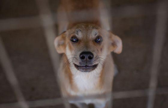 В Португалии запретили эвтаназию здоровых животных в приютах