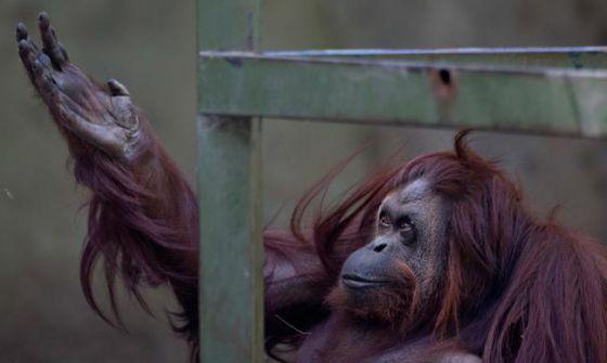 Зоопарк Буэнос-Айреса  освободит  животных