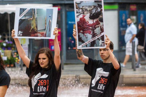 Кровавые стоки скотобойни захлестнули Лион: акция  269Life шокировала горожан
