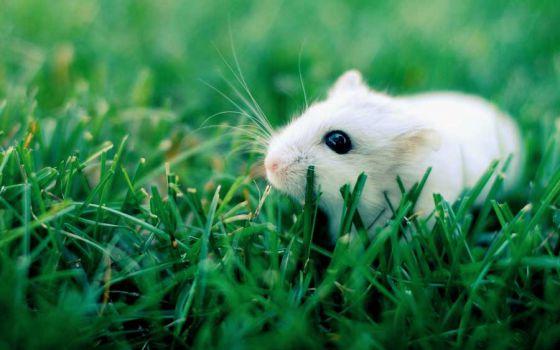 В США и Канаде больше не будут использовать животных в экспериментах для обучения студентов