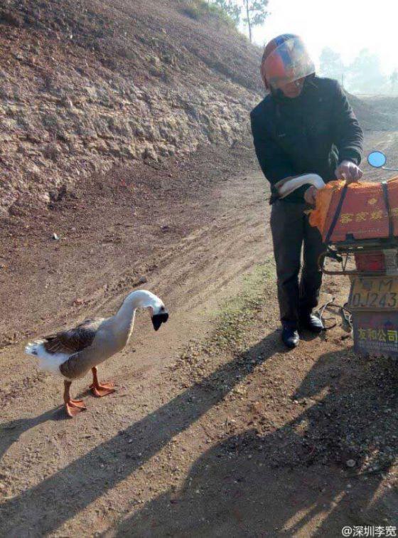 http://veganstvo.info/uploads/posts/2016-08/thumbs/1472608503_sad-goose-says-goodbye-602x813.jpg