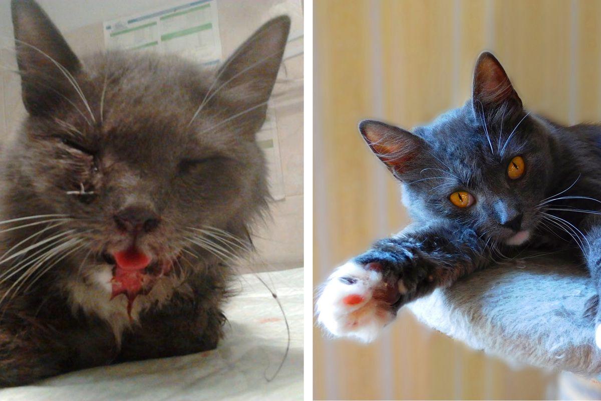 Картинки по запросу спасенные кошки до после