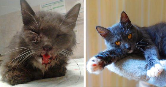 Спасённая кошка Варя ищет дом