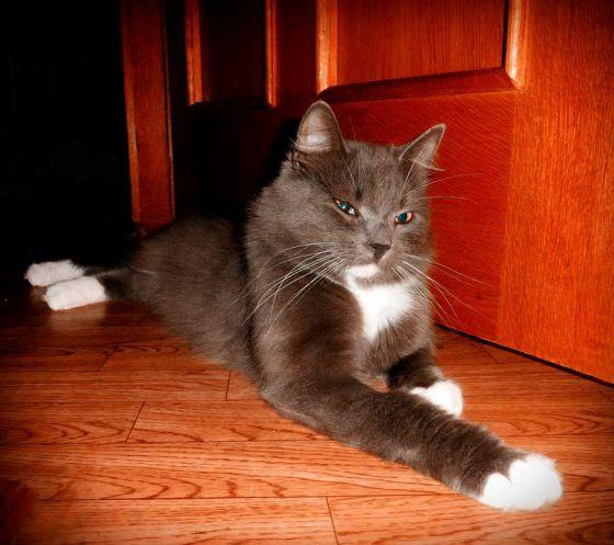 История спасения кошки Вари