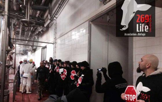 Во Франции  269Life  провели акцию  на скотобойне Сент-Этьена