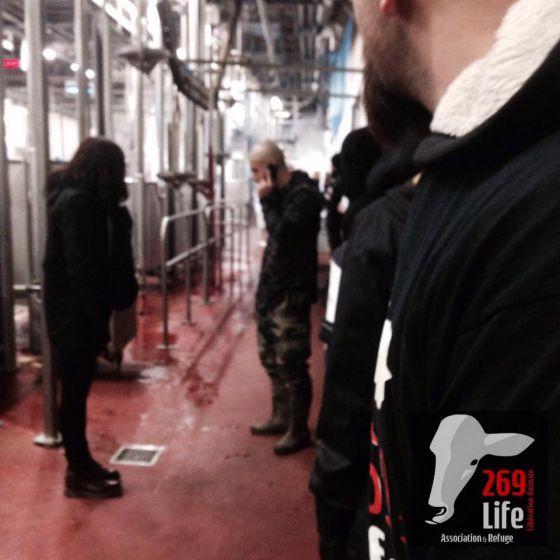 Во Франции  269Life  провел акцию  на скотобойне Сент-Этьена
