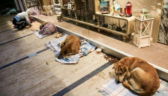 Торговый центр Стамбула стал прибежищем для бездомных собак