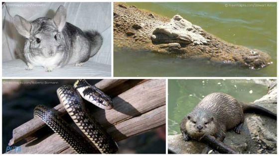В Индии запретили ввоз  кожи  рептилий и меха некоторых животных