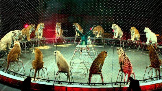 Старейший цирк Ringling Bros. объявил о своём закрытии