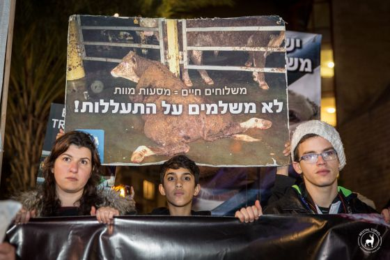 В Тель-Авиве прошла акция за отмену транспортировок животных
