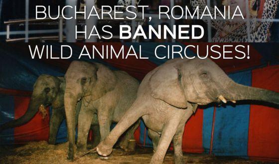 В Бухаресте запретили цирк с животными