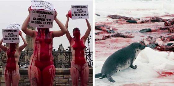РЕТА требует власти Канады остановить убийства тюленей: подпишите петицию
