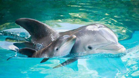 Во Франции запретили содержание дельфинов  в неволе