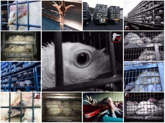 Активисты  269Life из Франции показали реальную цену продуктов убийств от компании Corico
