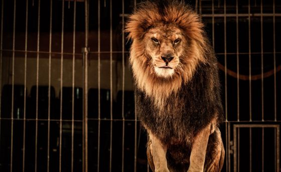 В Шотландии запретили цирки с животными