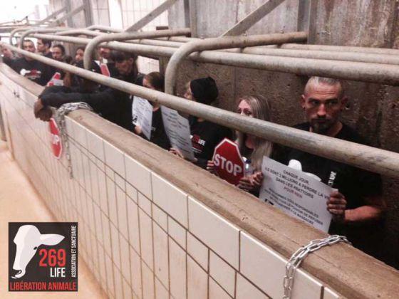 Активисты 269Life во Франции  побывали на скотобойне Bigard