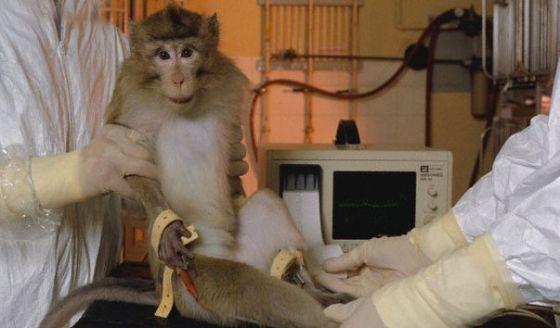 Новый метод изучения молекул позволит отказаться от опытов на животных