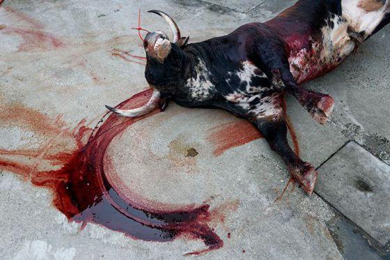 В Испании прошла  «кровавая»  акция  против развлечений с быками