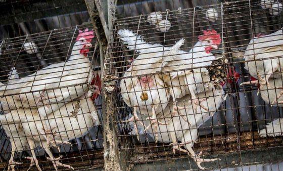 Производители яиц  терпят убытки  из-за альтернативной веганской  продукции