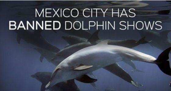 В Мехико запретили эксплуатацию дельфинов