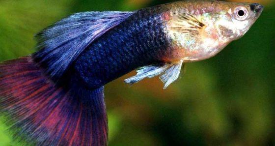 Вся правда о рыбах: они сообразительны, как обезьяны