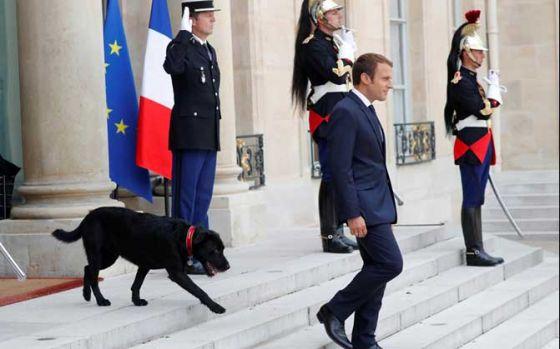 Президент Франции Эммануэль Макрон взял собаку из приюта