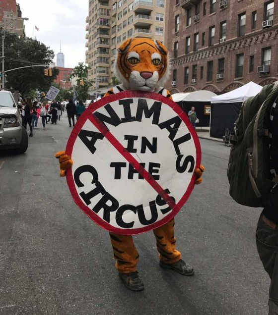 В Англии и Америке прошёл многотысячный марш против эксплуатации животных