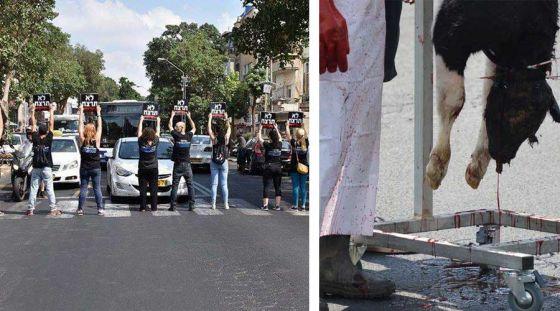 Активисты ALF Израиля  заблокировали движение:  провокационная  акция в Тель-Авиве