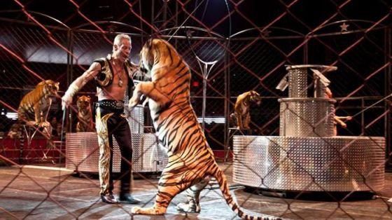 В Каменском запретили цирки с животными