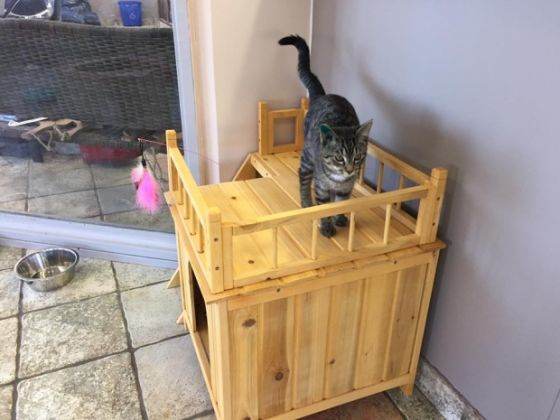 В Канаде открылось веганское кафе с кошками