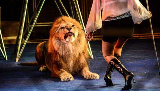 В Италии запретили цирки с животными