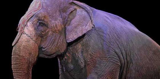 В Ирландии запретили цирки с дикими животными