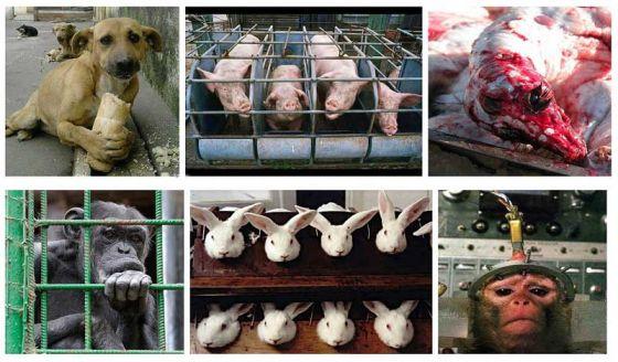 10 декабря – Всемирный День защиты прав животных: говори за тех, кого не могут услышать